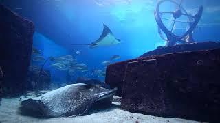 Keeping the Flow - Atlantis Bahamas
