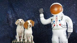 Dogs vs Astronaut & Mini Me: Funny Dogs Maymo & Potpie in Space!