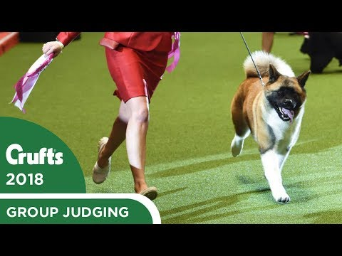 Eukanuba Stakes Finals   Crufts 2018