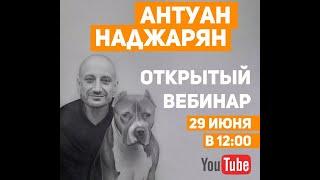 Частые ошибки в отношениях с собаками. Вебинар Антуана Наджаряна
