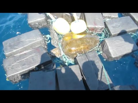Coast Guard Finds Endangered Sea Turtle Trapped in 1,800 Pounds of Cocaine
