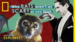 Why Bats Aren't as Scary as You Think | Nat Geo Explores