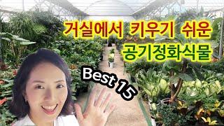 키우기 쉬운 공기정화식물 Best15 (거실편)