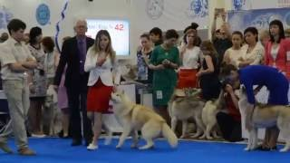 World Dog Show - 2016, 23-26 June, Moscow, Crocus Expo June 23, 201...