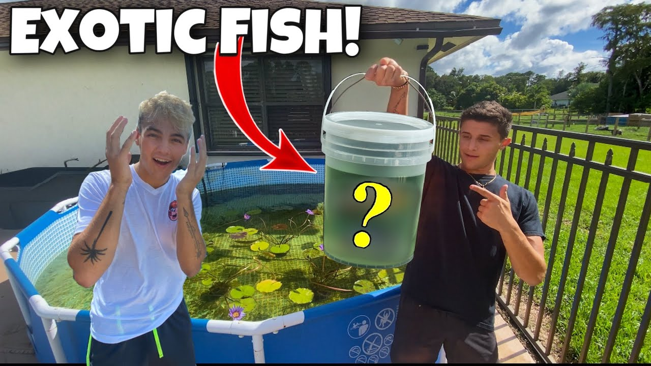 SURPRISING PAUL With EXOTIC FISH For His POND!! *Fish Feeding*