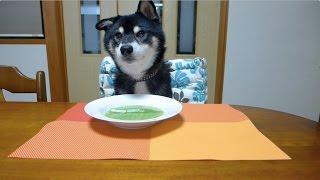 【悲しい】柴犬クロさん、飼い主の手作りごはんにまさかの対応