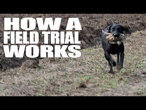 How A Field Trial Works