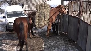 Լոռու ֆերմաներում խոտը վերջանում է, եղածի գինը՝ թանկանում
