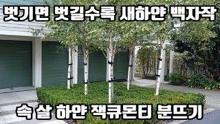 이 보다 더 하얀 나무…