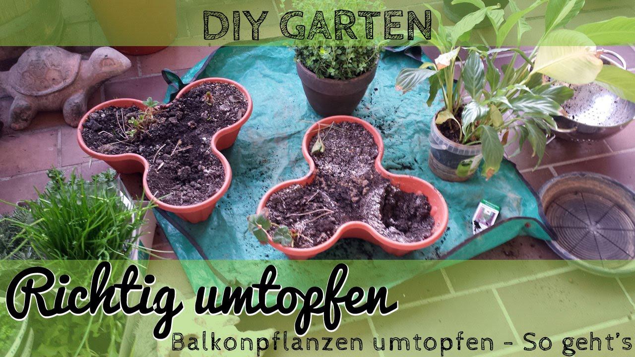 pflanze richtig umtopfen - umtopfen einer zimmerpflanze oder, Gartengerate ideen