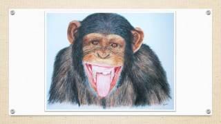 Manue Guimard - Artiste animalier - 2