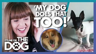 Victoria Surprised to see Viewer's Dog Behaving like her Own! | It's Me or The Dog