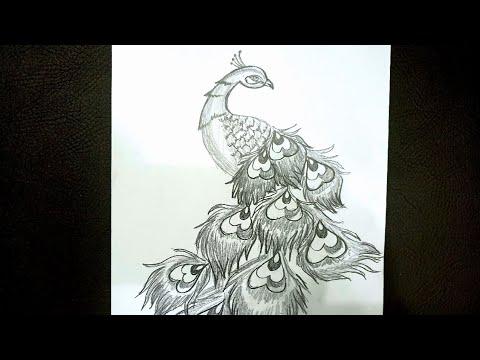 Cách Vẽ Con Công đơn giản bằng bút chì – How to Draw A Peacock with pencil – Kim Chi Art & Draw