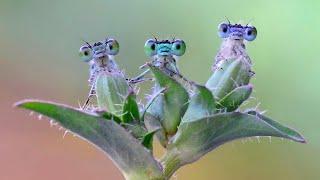 Удивительные животные и насекомые. Подборка 2019