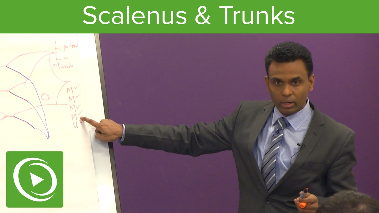 Scalenus & Trunks: Functions & Structure  – MRCS | Lecturio