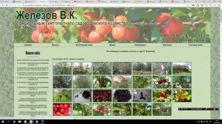 Найденные сайты с фото абрикосов и слив из сада В.К Железова