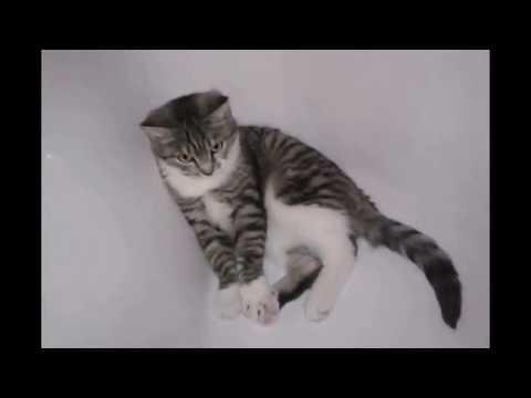 Вопрос: Как отлучить котят?