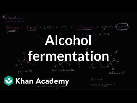 Alcohol or ethanol fermentation | Cellular respiration | Biology | Khan Academy