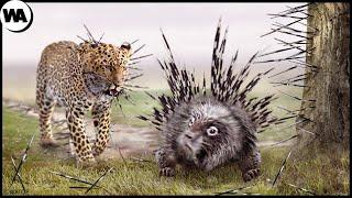 El Día en que Todos los Depredadores Temen a un Puercoespín