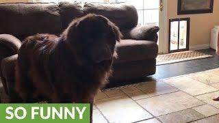Tiny karate coach teaches dog ninja moves