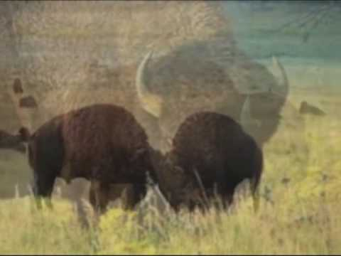 Tatanka Oyate, Honouring the buffalo nation