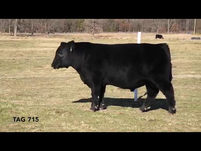 Missouri Angus Futurity 70