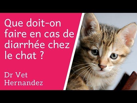 Que Doit On Faire En Cas De Diarrhée Chez Le Chat ?