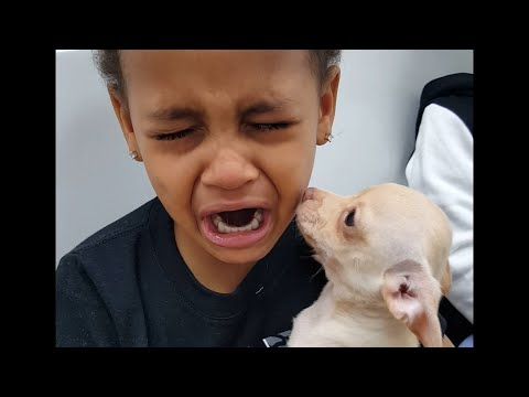 Little Boy Cries over Cute Puppy