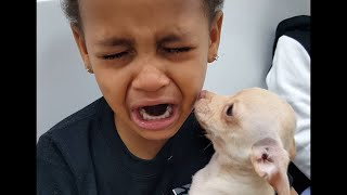 Little Boy Cries over Cute Puppy(, 2015-12-28T19:57:14.000Z)