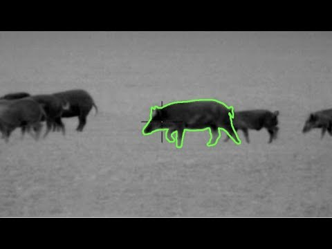 105 Hogs Down | Hog Hunting With Thermal Night Vision In Texas | Pulsar Thermion - Trail