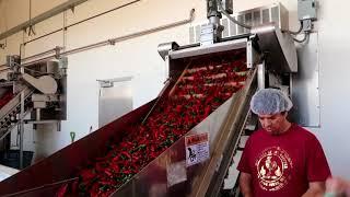 Famous Sriracha Sauce Factory Tour