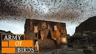 Video When Birds Defend KAABA (House of GOD) || Story of Ababil Birds and The Elephant download MP3, 3GP, MP4, WEBM, AVI, FLV Agustus 2018