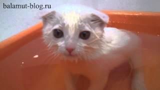 Кошка купается в ванной