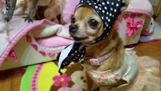 3 Little Babushkas - Chi Yum Yum