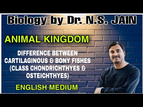 Difference Between Cartilaginous & Bony Fishes (Class Chondrichthyes & Osteichthyes) | In English