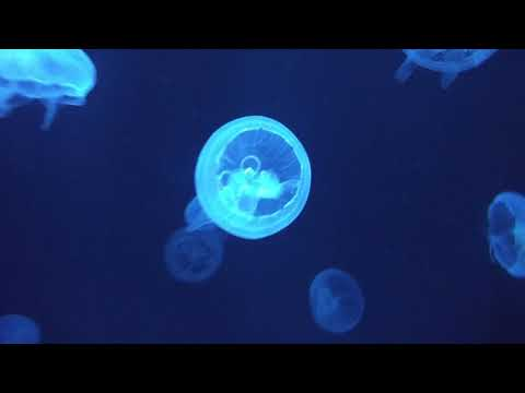 Jellyfishes - most amazing and beautiful sea creatures