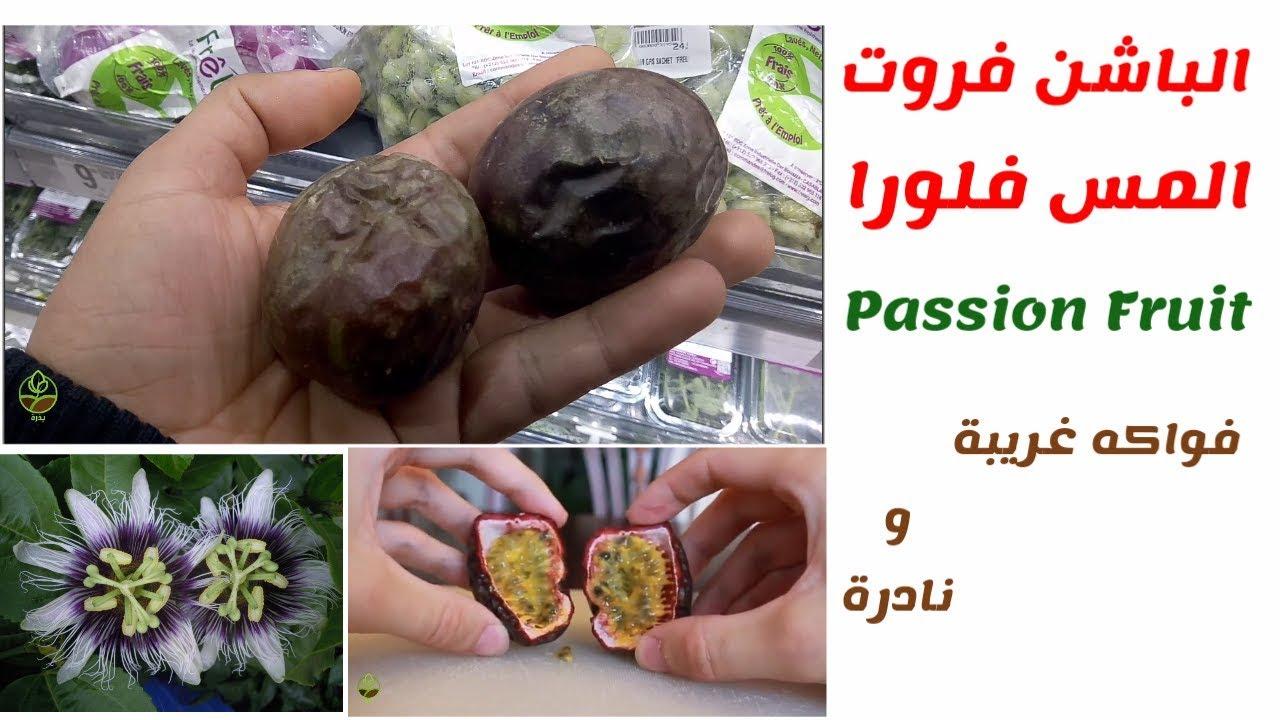 مس فلورا او فاكهة العاطفة Passion Fruit فاكهة غريبة ذات فوائد طبية وعلاجية كثيرة و سهلة الزراعة Youtube