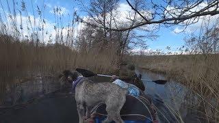 #часть1. Сплав Страча 2018. Собака первый раз на байдарке. Миттельшнауцер Тара.