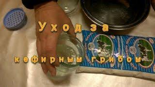 Тибетский молочный гриб. Как хранить тибетский гриб без молока.