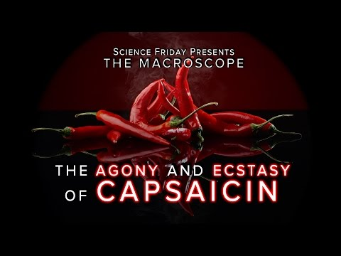 The Agony And Ecstasy Of Capsaicin