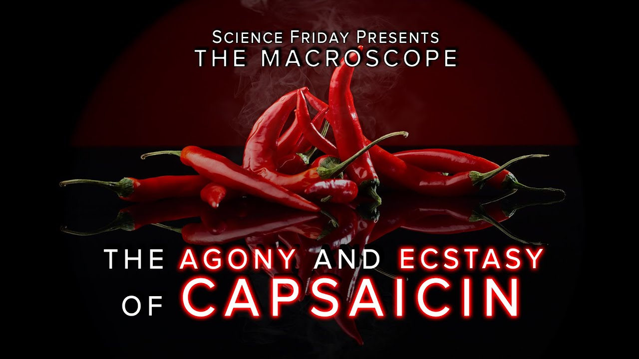 Image result for capsaicin pic
