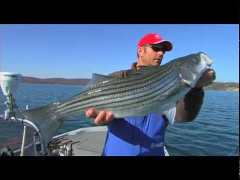 Fall stripers on beaver lake arkansas youtube for Beaver lake striper fishing