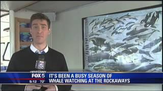 American Princess Cruises on FOX 5 New York - Whale Watching 9-24-2013