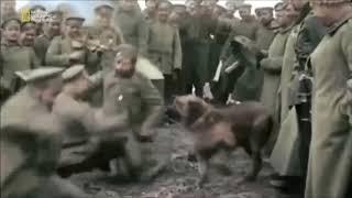 Первая мировая война: цветная кинохроника