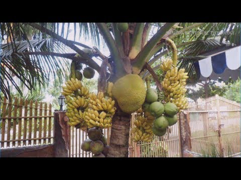 WOW!!! Strange Coconut Trees Bonsai - Amazing Agriculture Technology