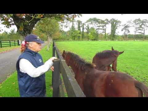 The Irish National Stud, Tuesday 10-October-2017, video 4