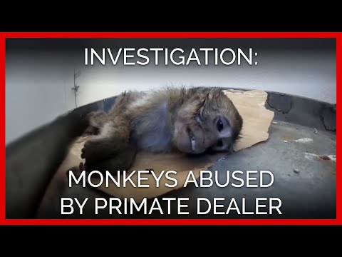 Download Youtube: Monkeys Abused by Notorious Laboratory Dealer | A PETA Eyewitness Investigation