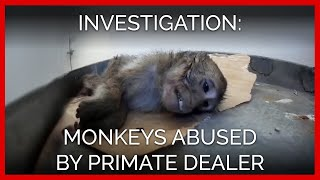 Monkeys Abused by Notorious Laboratory Dealer   A PETA Eyewitness Investigation