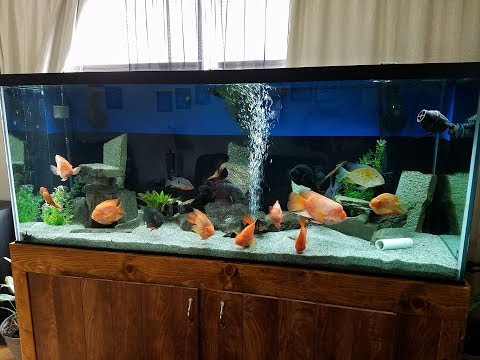 How I Removed Free Floating Debris/particles In The 220 Gallon Cichlid Tank
