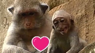 UNDER RAINING  Pity Julina Baby Monkey Very hungry    Mother  Weaning NO Milk   Baby Monkey Post